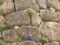 Mycenae-1-www.eternalgreece.com-by-E-Cauchi-0009