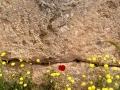 Mycenae-1-www.eternalgreece.com-by-E-Cauchi-0085