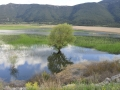 Lake-Stymphalia-1-www.eternalgreece.com-by-E-Cauchi-0394