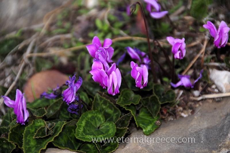 Mani-Peloponnese-www.eternalgreece.com-by-E-Cauchi-350